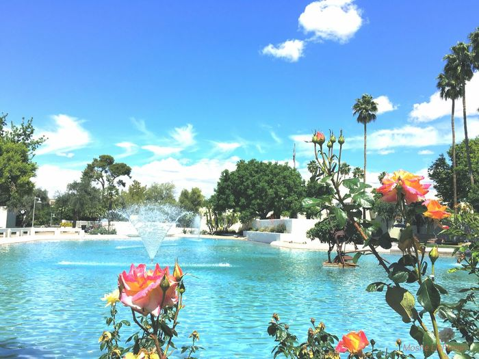 Pond Sprinklers Blue Water Blue Sky Flower Photography Old Town Scottsdale