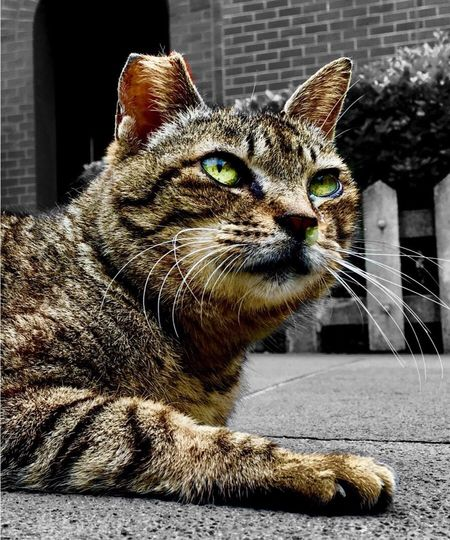 Animal Mammal Animal Themes Cat Feline One Animal Pets Day Looking No People