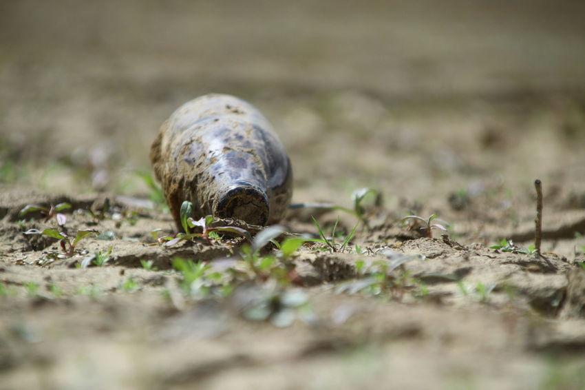 EyeEm Selects Tortoise Shell Tortoise Close-up Grass Hermit Crab Mollusk Crab Gastropod Invertebrate Seashell Animal Shell Animal Antenna Slow Mussel Crawling Snail Slug Beetle Shell Crustacean Crab - Seafood Turtle Sea Turtle