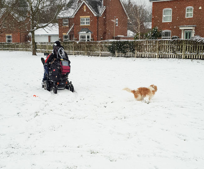 Snow Cold Temperature Winter Pets Dog Wheelchair