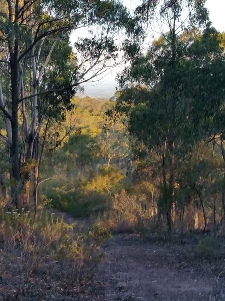 Australian Bush Nature Growth Tranquility Scenics Beauty In Nature No People Outdoors Tranquil Scene Day Country Living Country Living At Its Best ! Country Life Beauty In Nature Samsung Galaxy S5