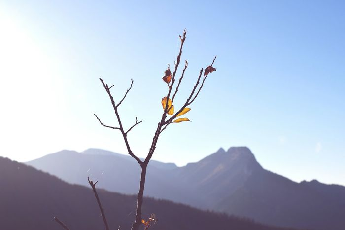 Blue Sky Blue Sky Blueandwhite Leaves Leaf Nature Zakopane Poland Twig Branch Climbing Walking Walking In The Mountains Photography Polishphotographer Nikonphotography Nikond3300 EyeEm Selects Mountain Plant Landscape Nature Mountain Range Tree Outdoors No People Day