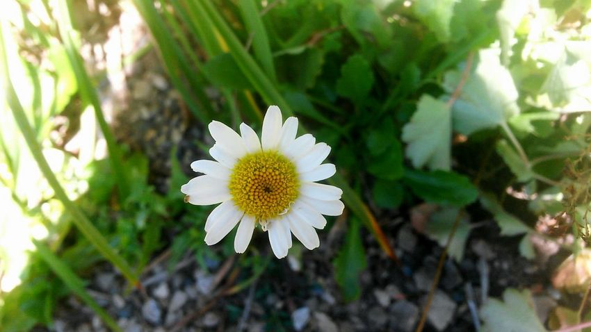 Flower Nature Flower Head Plant Petal Fragility Day Outdoors Beauty In Nature No People Close-up Leaf Freshness White The Week On EyeEm