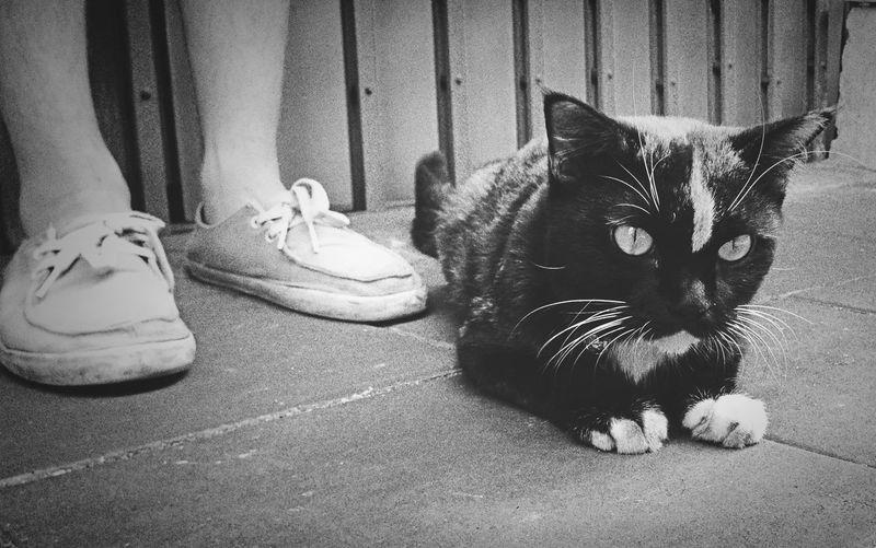 ImetCAT Blackandwhite Cat Streetphoto_bw