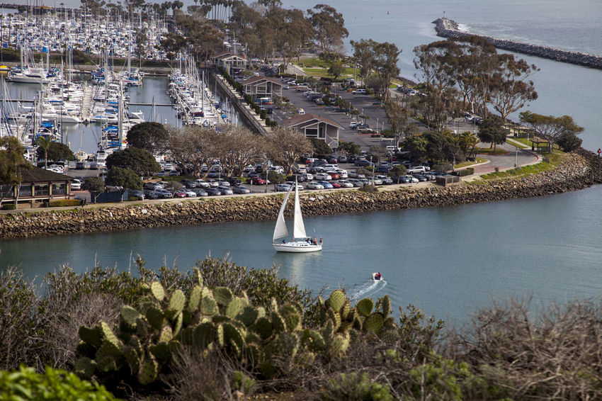 View of a Sailboat sailing through Dana Point Harbor from the hiking path in Southern California, USA on a sunny day Architecture Boat Bridge - Man Made Structure Building Exterior City Cityscape Dana Point, Ca Day Harbor Nautical Vessel No People Outdoors Sailboat Sailboats Sailing Ship Sky Travel Destinations Tree Water