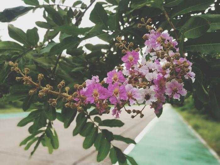 flowers booming