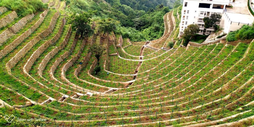 Terraces carved in the side of a mountain
