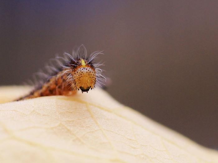 Close-up of orange caterpillar on leaf