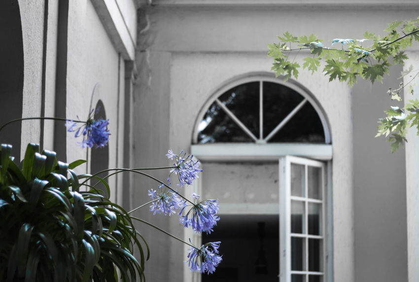 Architecture Beauty In Nature Blooming Building Exterior Built Structure Close-up Day Flower Flower Head Fragility Freshness Garden Growth Nature No People Outdoors Plant Purple Window Window Box