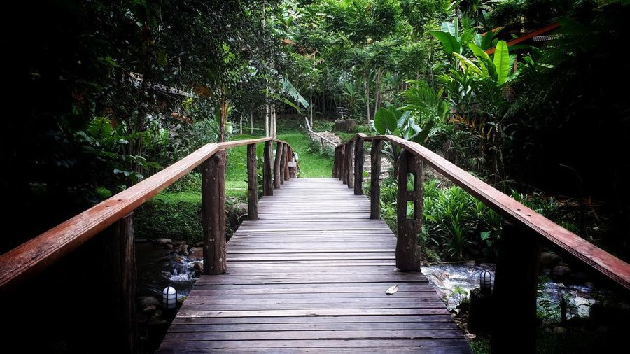 Wooden footbridge along trees in forest