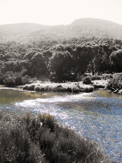Beauty In Nature Black And White With A Splash Of Colour Clear Sky Day Growth Landscape Mountain Nature No People Outdoors Scenics Sky Tranquil Scene Tree Water Riverside Reflection My Life My Adventure Australian Landscape Photography Everywhere Betterlandscapes Black And White Landscape Mountains Eucalyptus Trees National Park