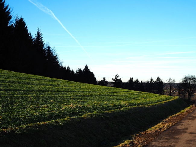 meadow and blue sky Baden-Württemberg  Blue Color Green Color Path South Trees Background Beauty In Nature Blue Sky Day Forest Germany Grass Landscape Meadow Nature No People Outdoors Rural Scene Scenics Sky Tranquil Scene Tranquility Vapor Trail Wallpaper