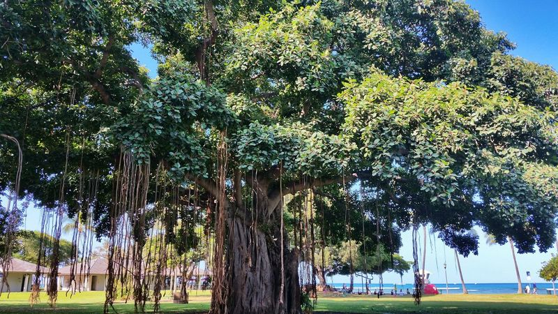 Check This Out Waikiki Travel Photography Oahu Hawaii Vacation TreePorn Green