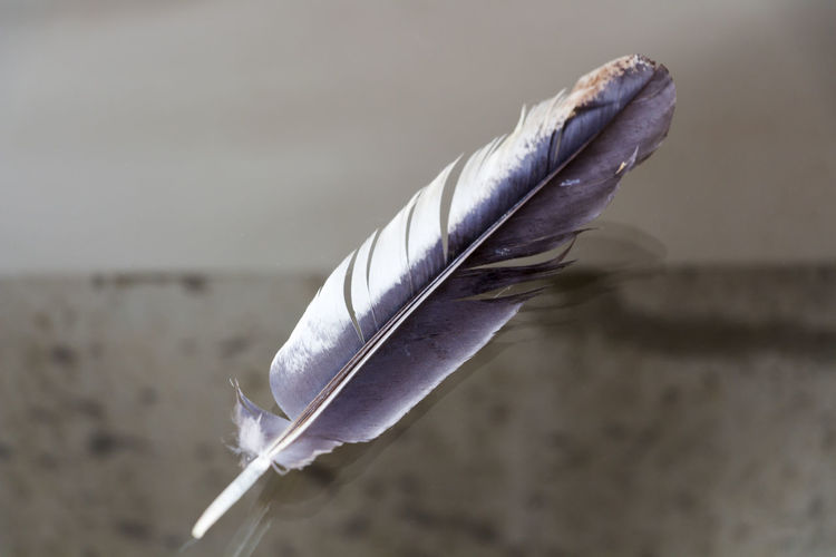 Close-up of feather on paper
