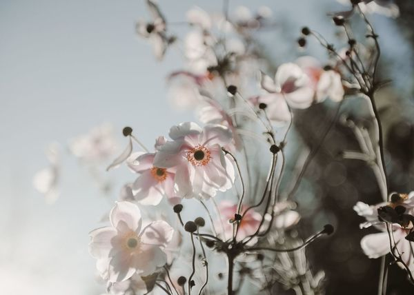 Flower Blossom Beauty In Nature Nature Fragility Growth Branch Springtime White Color Apple Blossom No People Petal Flower Head Close-up Outdoors Tree Freshness TheWeekOnEyeEM