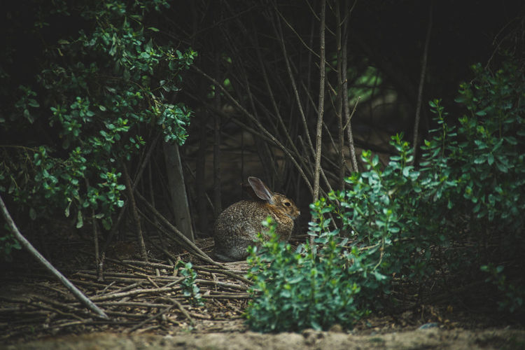 Animal Themes Animal Wildlife Animals In The Wild Beauty In Nature Bunny  Day Mammal Nature No People One Animal Outdoors Plant Rabbit Tree Wildlife