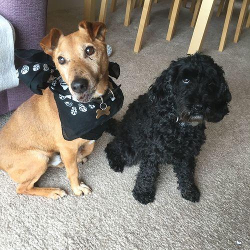 Pets Domestic Animals Pet Collar At Home
