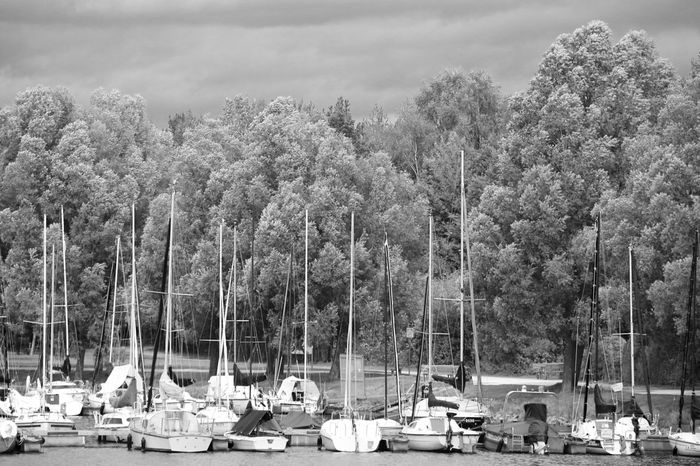Sailing Boats Sailing Ships Ships Harbor Moored Lake Trees Black And White Outdoors Day No People The Week On EyeEm Black And White Friday Summer Exploratorium