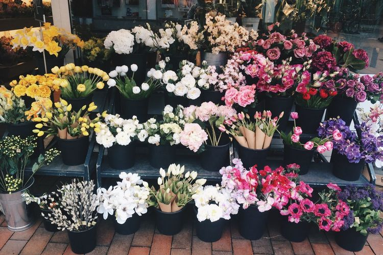 Variation of flowers on display at store