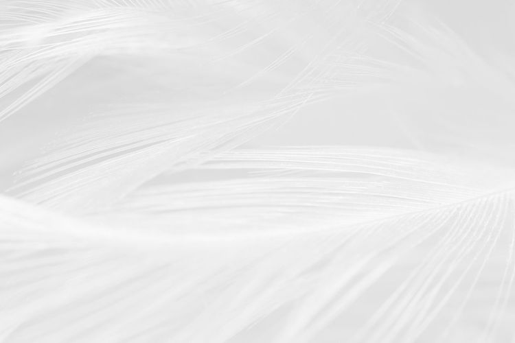 Beautiful white feather wool pattern texture background