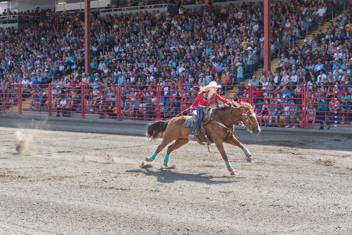 Williams Lake, British Columbia/Canada - July 2, 2016: woman pushes her horse to the finish line during a barrel racing competition at the 90th Williams Lake Stampede, an internationally famous event. 90th Williams Lake Stampede Arena British Columbia, Canada Canadian Professional Rodeo Association Determination Horse And Rider Racing Rodeo Woman Action Audience Barrel Racing Cowgirl Dangerous Editorial  Extreme Sports Fast Grit Horseback People Professional Rodeo Pushing Speed Stampede Urging