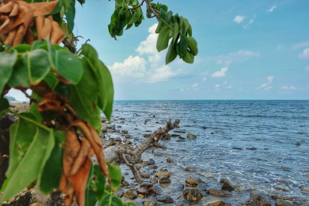 sea, beauty in nature, nature, leaf, sky, water, horizon over water, no people, day, outdoors, scenics, green color, growth, tranquility, plant, cloud - sky, tree, freshness, food, close-up