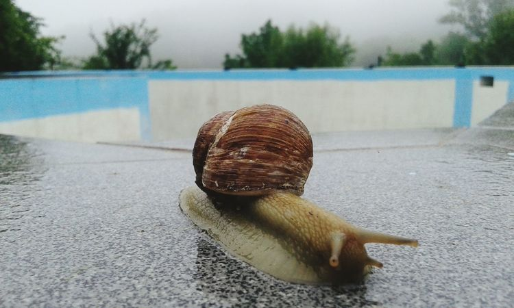 Foggy day, snail in a hurry Animal Shell Animals In The Wild Zoology