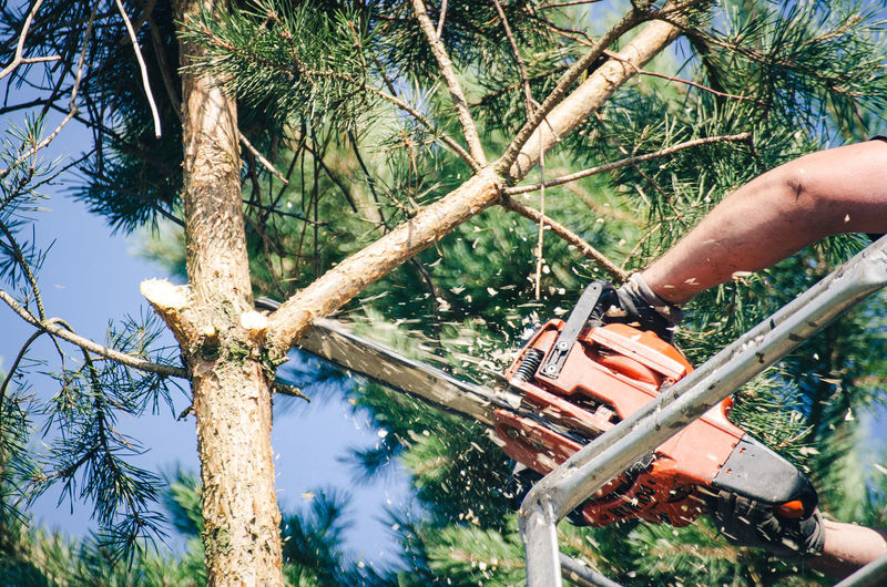 Cropped hands of man cutting tree branch with chainsaw