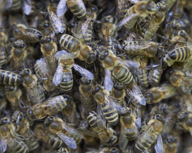 Bee Scrum