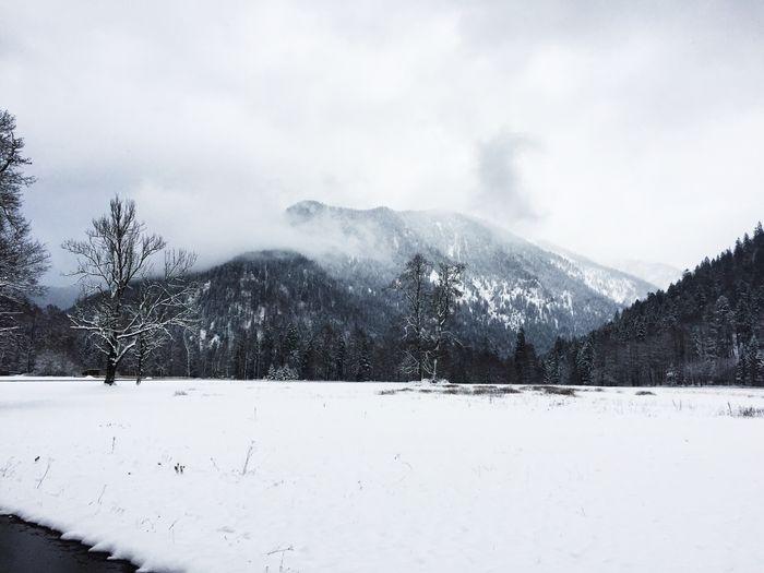 Winter im Voralpenland. Winter Wintertime Winter Wonderland Tree The Alps Natural Beauty Nature