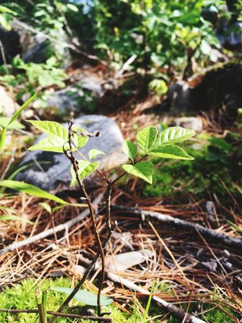 Forest floor in early summer Summer Green Leaf Plant Growth Nature Fragility Outdoors Day First Eyeem Photo
