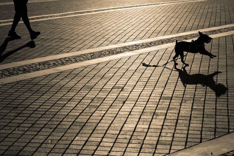 Brilho Calçada Caminhar Cao Correr Dog Low Section Men And Dog Passeio  Ride Rua Running Shadow Silhouette Silhueta Sombra Street