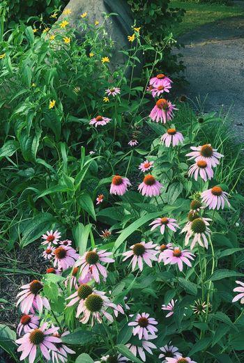 Full frame shot of flowers blooming in park