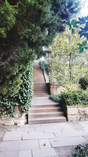 Tree Growth No People Plant Green Color Nature The Way Forward Day Leaf Outdoors Steps Ivy Creeper Plant Steps And Staircases Beauty In Nature Close-up Baden Baden Baden Baden Germany