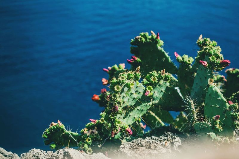 Water Growth Nature Beauty In Nature Plant No People Leaf Day Outdoors High Angle View Green Color Lake Sunlight Flower Fragility Close-up Freshness Prickly Pear Cactus Lily Pad Flower Head