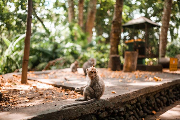 Portrait of an animal sitting on tree