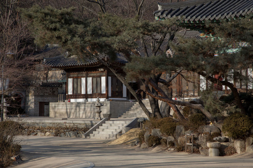 Animal Representation Architecture Buddhism Buddhist Temple Building Exterior Built Structure Day House Hut Leading Narrow Old Outdoors Railing Roof Ruined Silsangsa Steps Thatched Roof The Way Forward Tree Winter Winter Wood