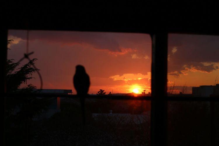 birds watching