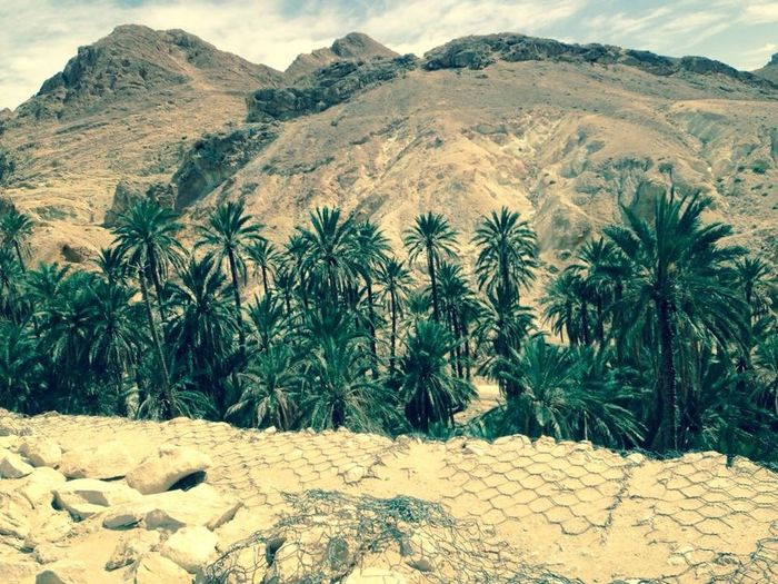 Arid Climate Day Desert Landscape Desert Life Growth Landscape Nature No People Outdoors Plant Sand Tunisia