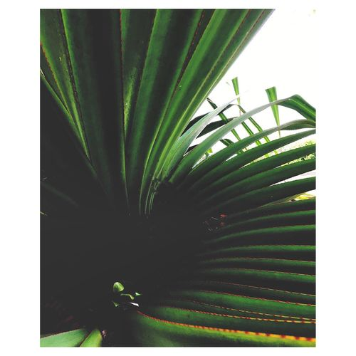 Wet Green Palm Plant Tropical