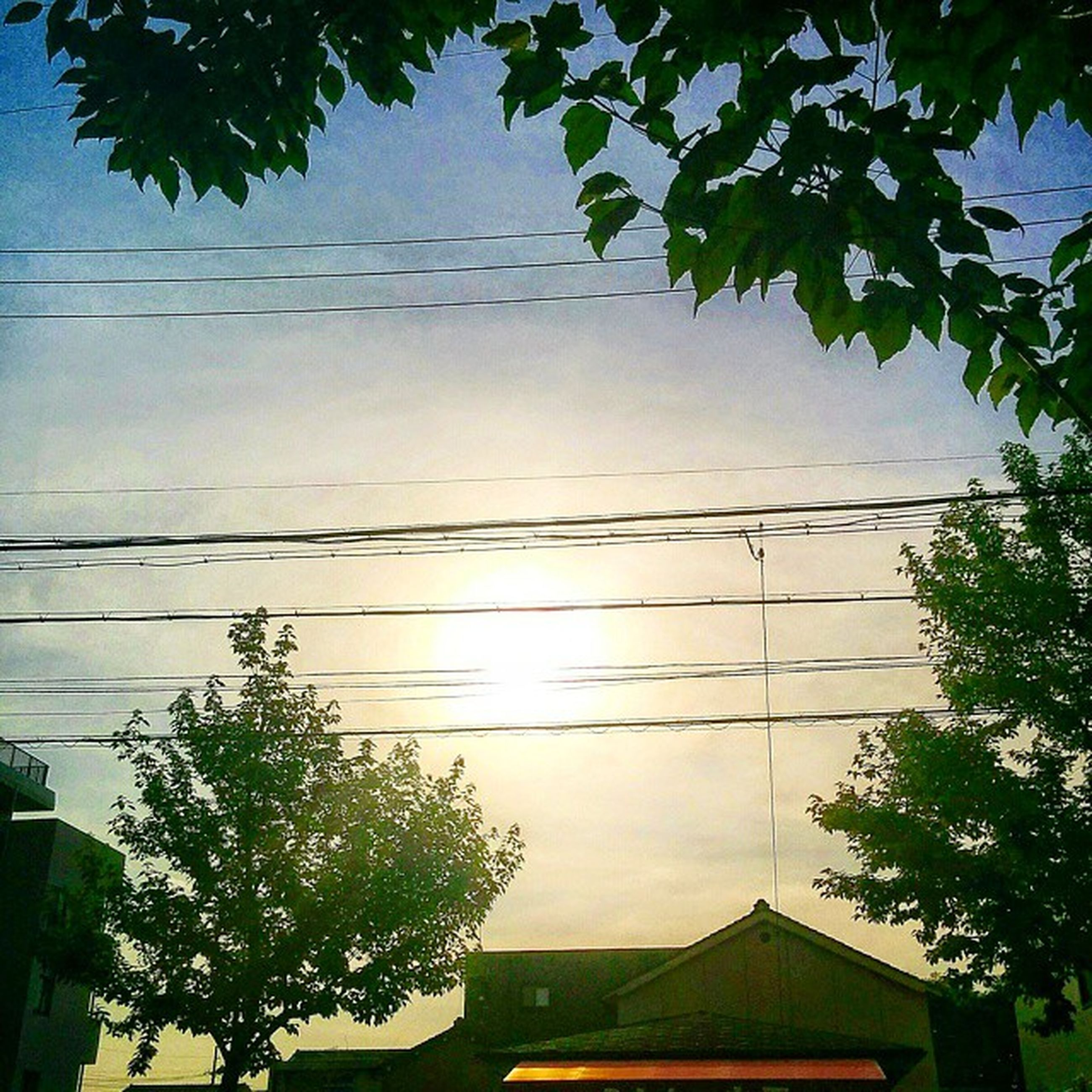 tree, power line, low angle view, built structure, building exterior, architecture, cable, house, electricity, sky, electricity pylon, power supply, residential structure, branch, growth, high section, residential building, connection, no people, nature