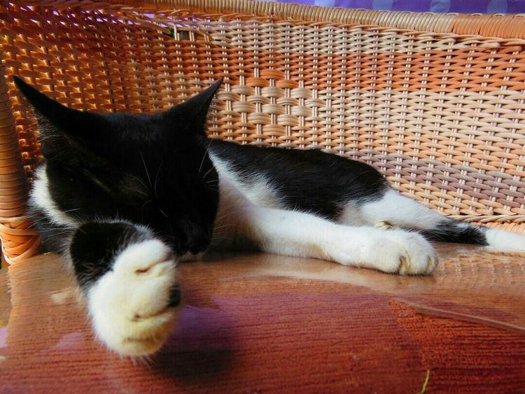 Animals Sleeping Cat Gatos Sx50hs No Filter