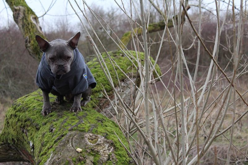 Belu Bullylove One Animal Animal Themes Animal Wildlife Animal Animals In The Wild Outdoors No People Day Mammal Domestic Animals Nature Grass Branch Tree Close-up