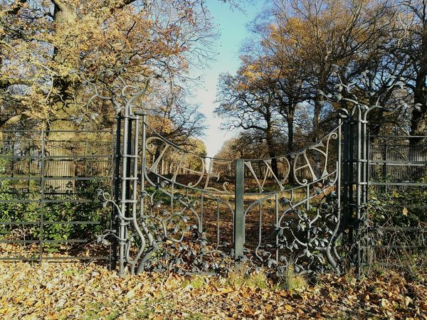 The Way Gateway Tree Nature Mystery Adventure Door Gate Metalwork Fantasy WoodLand Richmond Park, London England, UK London Magical Place Magical Forest Magic Walk Wood Beauty In Nature Nature No People Walking HuaweiP9
