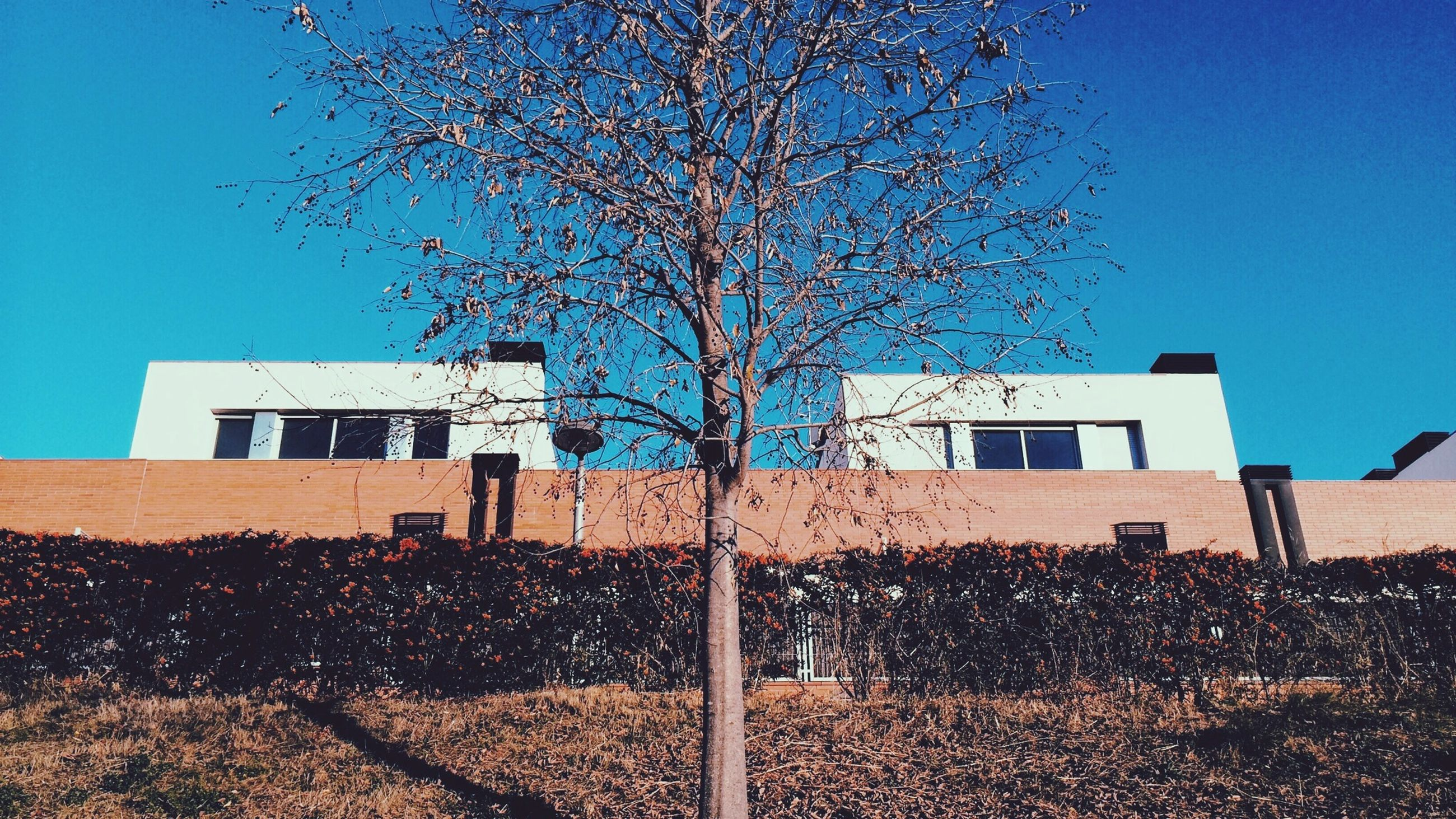 building exterior, architecture, built structure, clear sky, blue, bare tree, house, tree, window, residential structure, low angle view, sky, residential building, branch, sunlight, day, no people, outdoors, building, fence