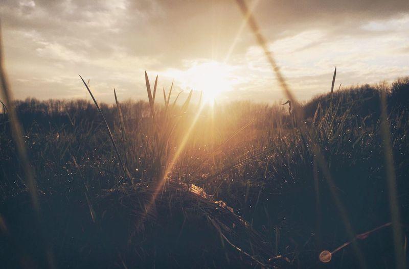 •evening light•
