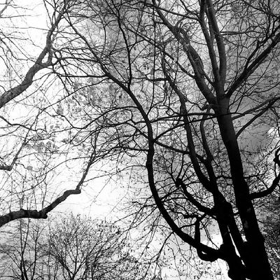 Not branches but cracks in the sky Cracow Krakow Planty Sky Blackandwhite Contrast