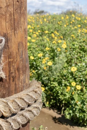 wooden post by yellow wildflowers Plant Wood - Material Tree Nature Focus On Foreground Growth Day No People Outdoors Close-up Flower Flowering Plant Beauty In Nature Tree Trunk Yellow Land Trunk Sunlight Tranquility Field Wooden Post Bark
