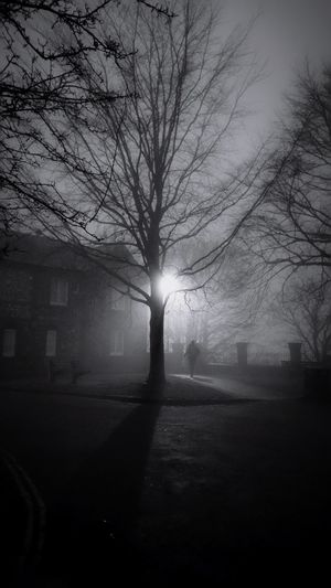 Tree Bare Tree Dark Darkness And Light Winter Evening Plant Darkness Nature Nature_collection Shadow Road Nature Outdoors One Person Blackandwhite Building Exterior Streetphotography Lamp England Silhouette Sky Branch Day Architecture