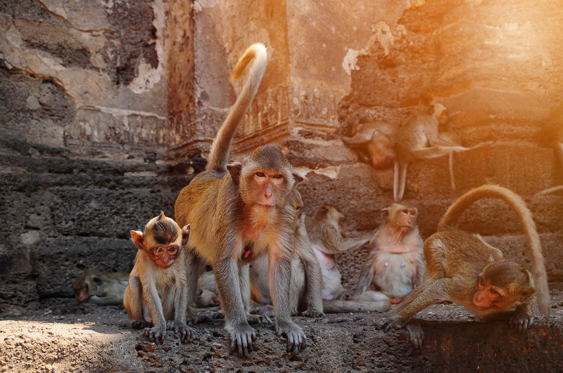 View of monkeys